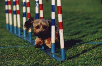FunQuest Dog Sports - Professional Dog Agility Training and K9 ...